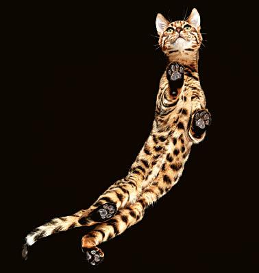 """Projektą """"Underlook"""" vaikinas pradėjo fotografuojant kates."""