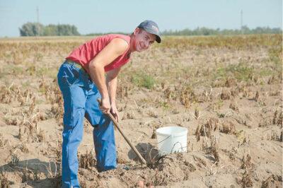 Ūkininko laukuose užaugintomis daržovėmis maitinama darželiuose, mokyklose, net įkalinimo įstaigose.