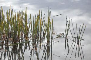 Siekiant pagerinti vandens telkinių ekologinės būklės rodiklius svarbu tramdyti ir atsakingai vystyti žemės ūkio veiklą.
