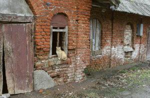 Vieną iš Paežerių dvaro sodybos ansamblio istorinių pastatų, buvusią kiaulidę, planuojama atnaujinti ir pritaikyti kavinei. Lankytojai turėtų apsidžiaugti...