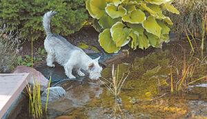 """Vandens kokybę """"įvertina"""" ir šuo, ir žalčiai."""