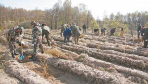 """Iki lapkričio 16 dienos užpildę paraiškas pagal KPP priemonės """"Investicijos į miško plotų plėtrą ir miškų gyvybingumo gerinimą"""" veiklos sritį """"Miško veisimas"""" pareiškėjai gali pasidalyti 9 283 964 eurus paramos lėšų."""