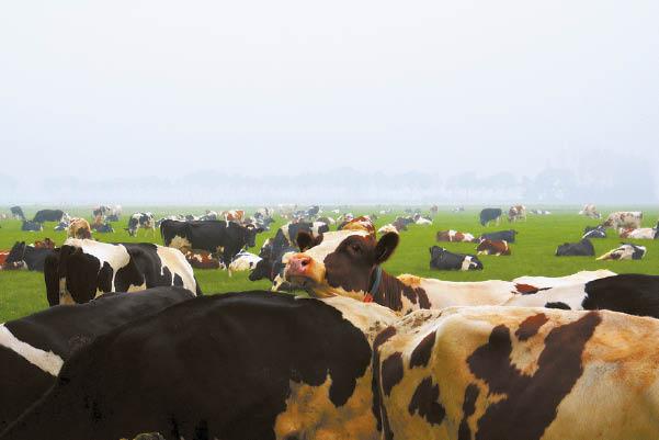 Smulkiems ir vidutiniams ūkiams  atiteko didžioji paramos dalis