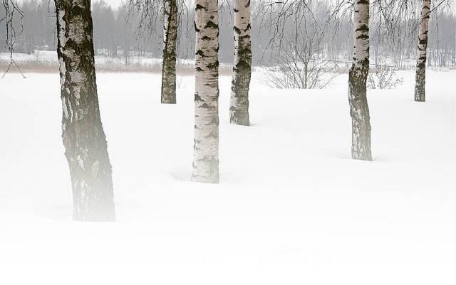 Mano beržų karalystėje –  ruduo, žiema... (Kasdienė lyrika)