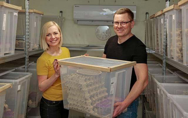 Greta ir Vaidas Budreikai – pirmieji naminių svirplių augintojai Suvalkijoje.