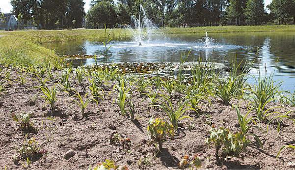 Smėlingoje žemėje gėlės sunkiau auga, tad ją pavasarį darbininkai maišė su juodžemiu.