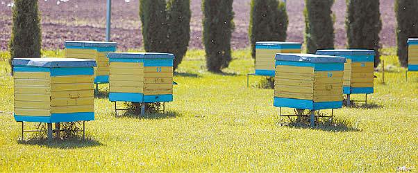 Už gyvybę aviliuose nėra atsakingas vien tik žemės ūkis. Atsakomybė už bičių sveikatą tenka ir jas prižiūrintiems bitininkams.