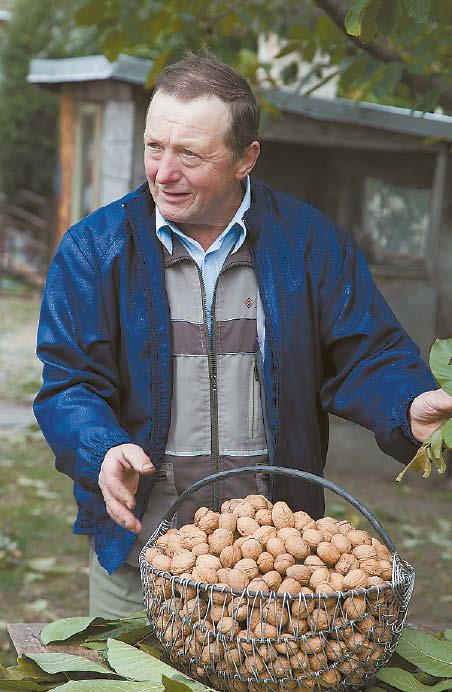 Marijampolės regione Algirdas Jušinskas geriau žinomas kaip riešutų augintojas ir ūkininkas, tačiau apie bitininkystę jis nutuokia ne ką mažiau ir teigia, jog bitės – vienas svarbesnių žmonijos išlikimo garantų.