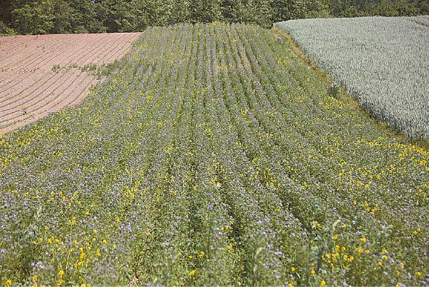 Padovinio ŽŪB sutinka, kad žemės ūkis prisideda prie natūralių pievų nykimo, kuriose bitės yra pratusios rinkti nektarą. Prisiimdama atsakomybę bendrovė net kelis kartus per metus sėja medinguosius augalus, mėlynai žydinčią bitinę faceliją, kad pritrūkusios natūralių ganyklų, bitės turėtų kur darbuotis.