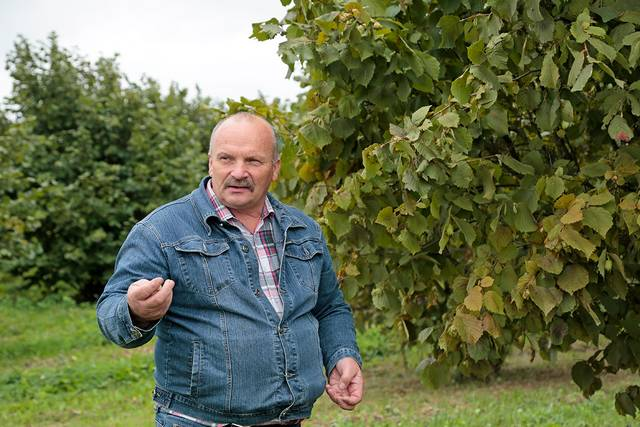 """""""Tradiciniai lazdynai bus kaip mano palikimas, jie augs ir derės gal ir 100 metų"""", – ilgalaike investicija neabejoja Vidmantas Krapavičius."""
