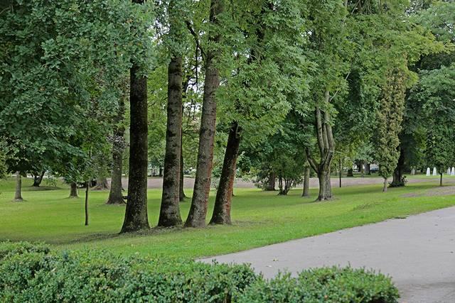Medžiai ne tik puošia aplinką, bet ir valo orą – iš atmosferos paima anglies dioksidą ir išskiria deguonį.