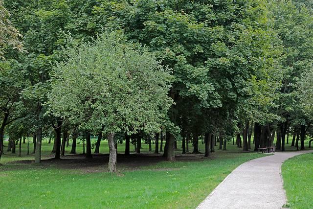 Medžių gaiva vilioja į Pašešupio parką.
